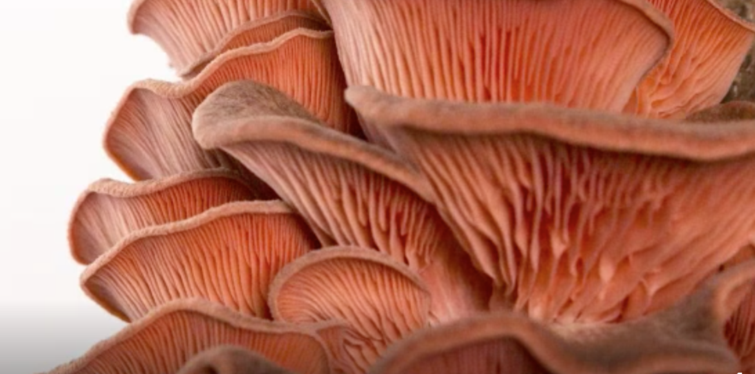 Mushrooms will save the world!